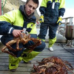 Foto 3 de 5 de la galería cangrejo-real-en-noruega en Diario del Viajero