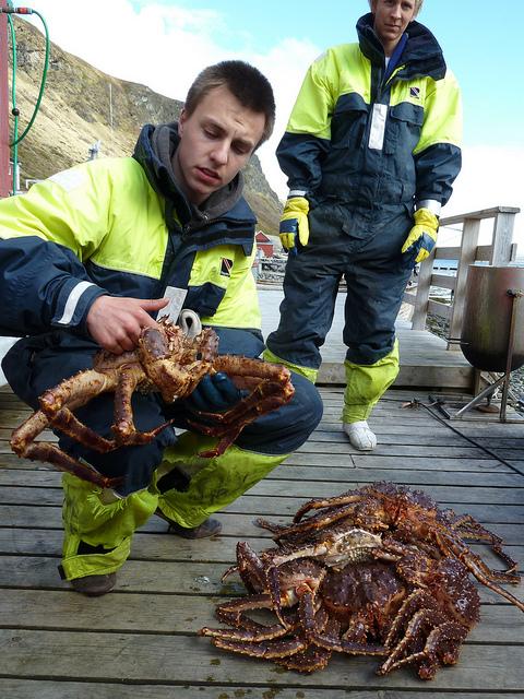 Foto de Cangrejo Real en Noruega (3/5)