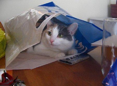 ¿Hay gato encerrado en las bolsas reutilizables?