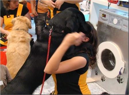 Programa pionero de asistencia con perros a menores en los juzgados de la Comunidad de Madrid