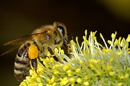 Un pesticida a base de veneno de araña podría proteger las poblaciones de abejas