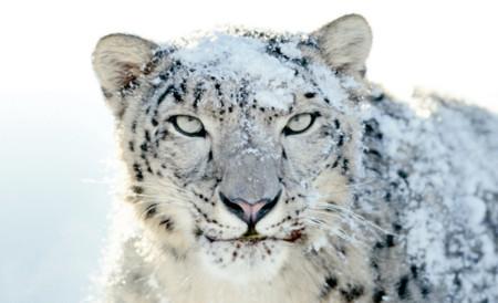 Apple corta por lo sano y retira el soporte oficial de Snow Leopard