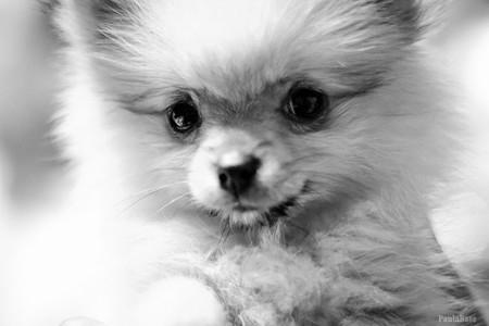¿Nos enseñas tu última foto de animales?: La pregunta de la semana