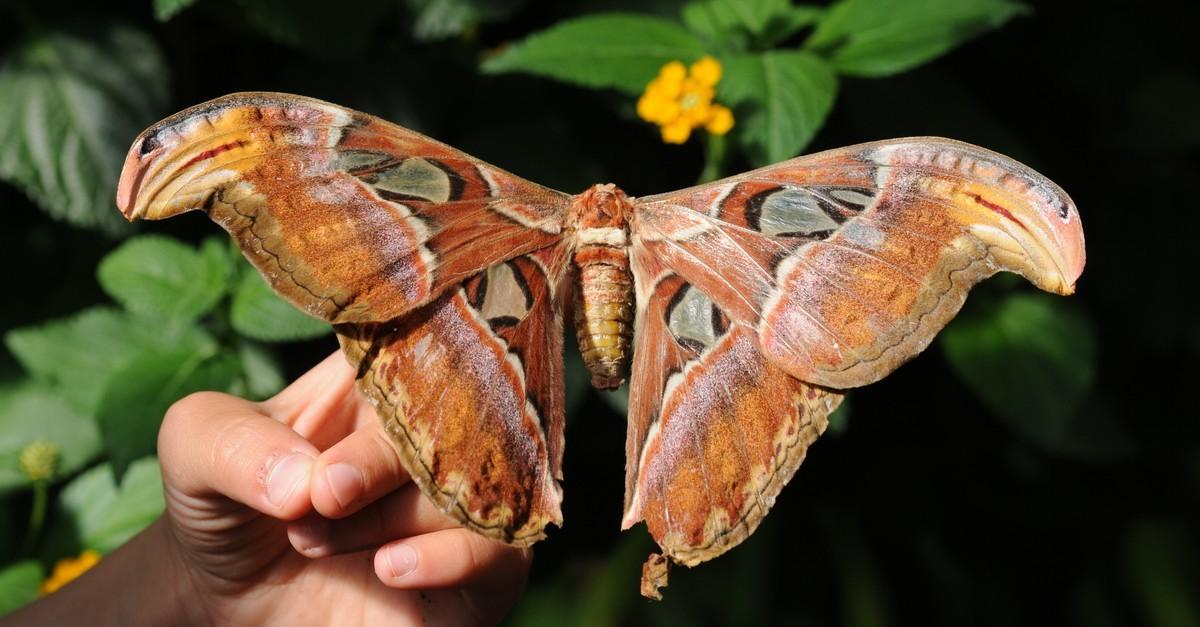 Hermosas mariposas y polillas que existen en el mundo