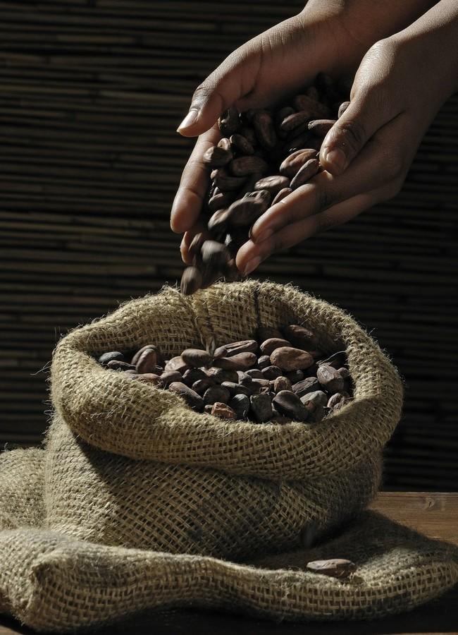 Cacao Saco