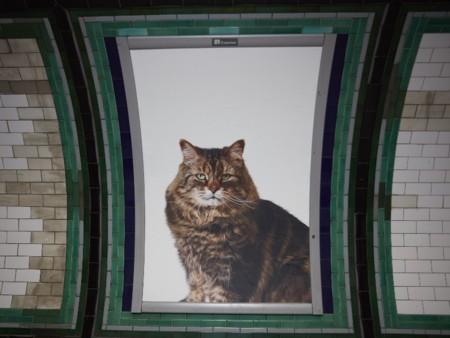Los gatos toman el poder en el metro de Londres