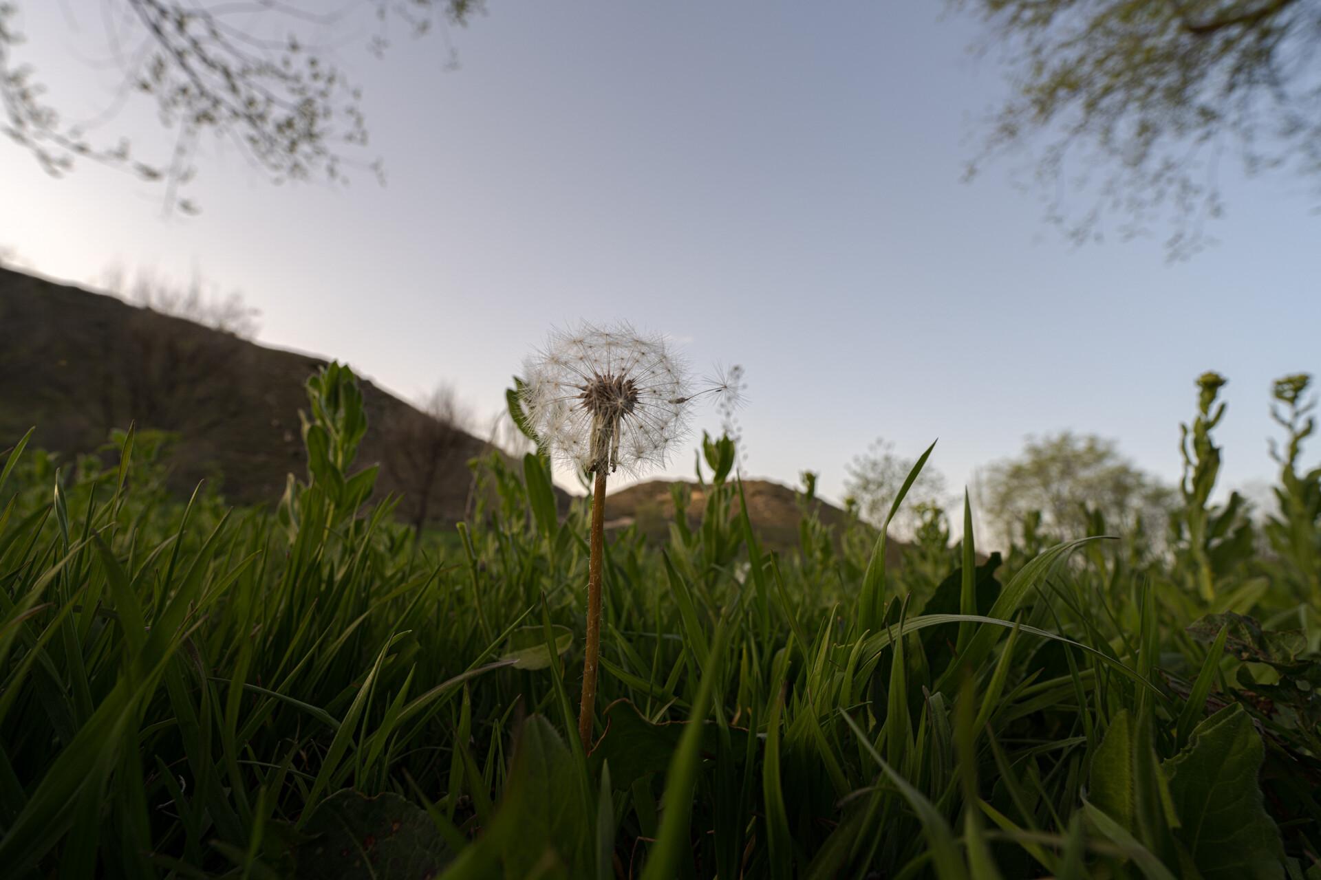Foto de Sony FE 14mm F1.8 GM (14/26)