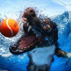 Foto 3 de 7 de la galería sorprendentes-fotografias-caninas-bajo-el-agua en Xataka Foto