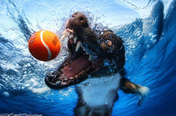 Foto de Sorprendentes fotografías caninas bajo el agua (3/7)