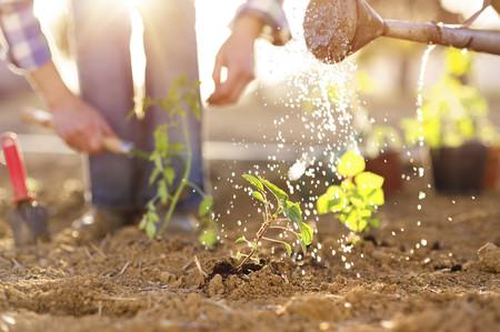 Lo dice la ciencia: la jardinería es buena para ti