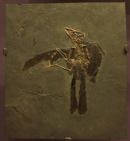 Dans L Ombre Des Dinosaures Masillatrogon 018