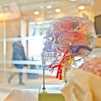 Esta startup tiene un sistema para embalsamar tu cerebro y preservarlo para el futuro: el único problema es que lo necesita vivo