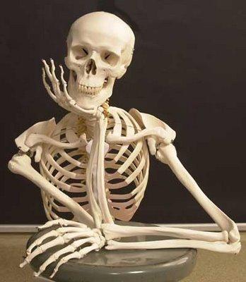 El esqueleto humano en cifras