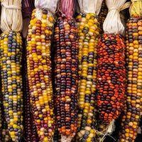 Aprueban Ley Federal para el Fomento y Protección del Maíz Nativo y decretan el 29 de septiembre Día Nacional del Maíz
