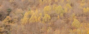 Cómo mejorar en nuestras fotografías los colores otoñales con ayuda de Adobe Photoshop