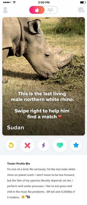 Sudan Tinder