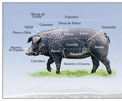 despiece_cerdo