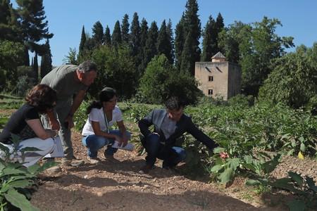 La Alhambra Abre Gratis Las Las Huertas Del Generalife