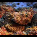 El blanqueo de los corales ya alcanza el 93% en la Gran Barrera de Coral