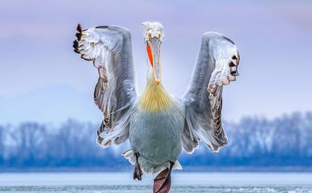 Estas son las fotografías ganadoras del certamen internacional 2019 Bird Photographer of the Year