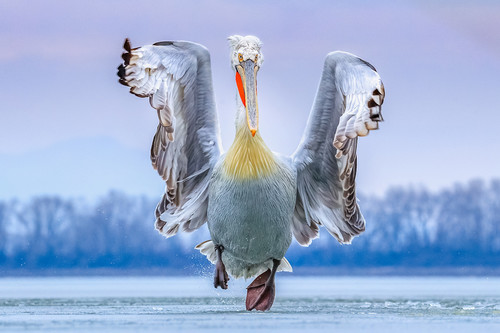 Estas son las fotografías ganadoras del certamen internacional 2019 Bird Photographer of the Year