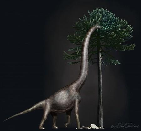 Con un metro de ancho, éste es el pie más grande jamás encontrado de dinosaurio