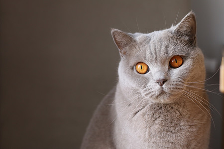 Como Fotografiar Mascotas I Gatos 14
