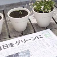 Después de leer este periódico japonés puedes plantar sus semillas