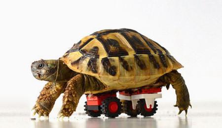 Sí, Lego sirve para construir y a esta tortuga le construyó un nueva vida