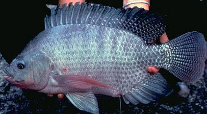 La piel de pescado ya tiene mercado