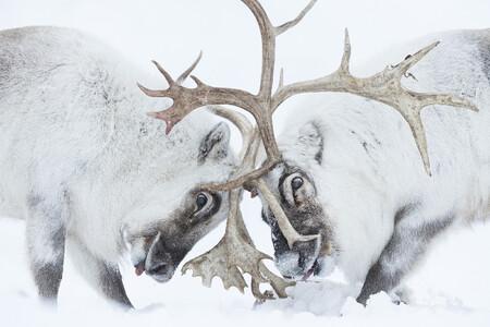 C Stefano Unterthiner Wildlife Photographer Of The Year