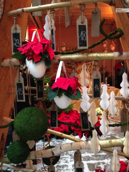 Poinsettia Navidad 2