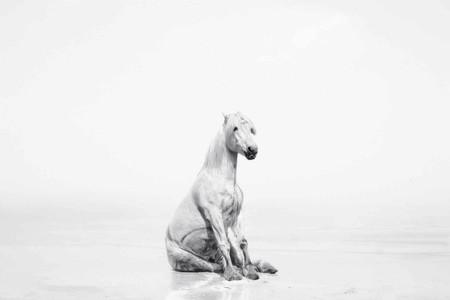 'Los unicornios existen', la última serie de Isabel Muñoz