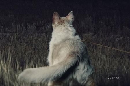 'It Comes at Night', tráiler del film de terror con Joel Edgerton