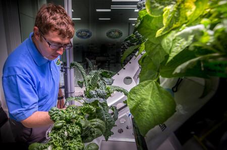 Una verdura china florece en el espacio: la Estación Espacial Internacional trabaja para que los astronautas produzcan su propia comida