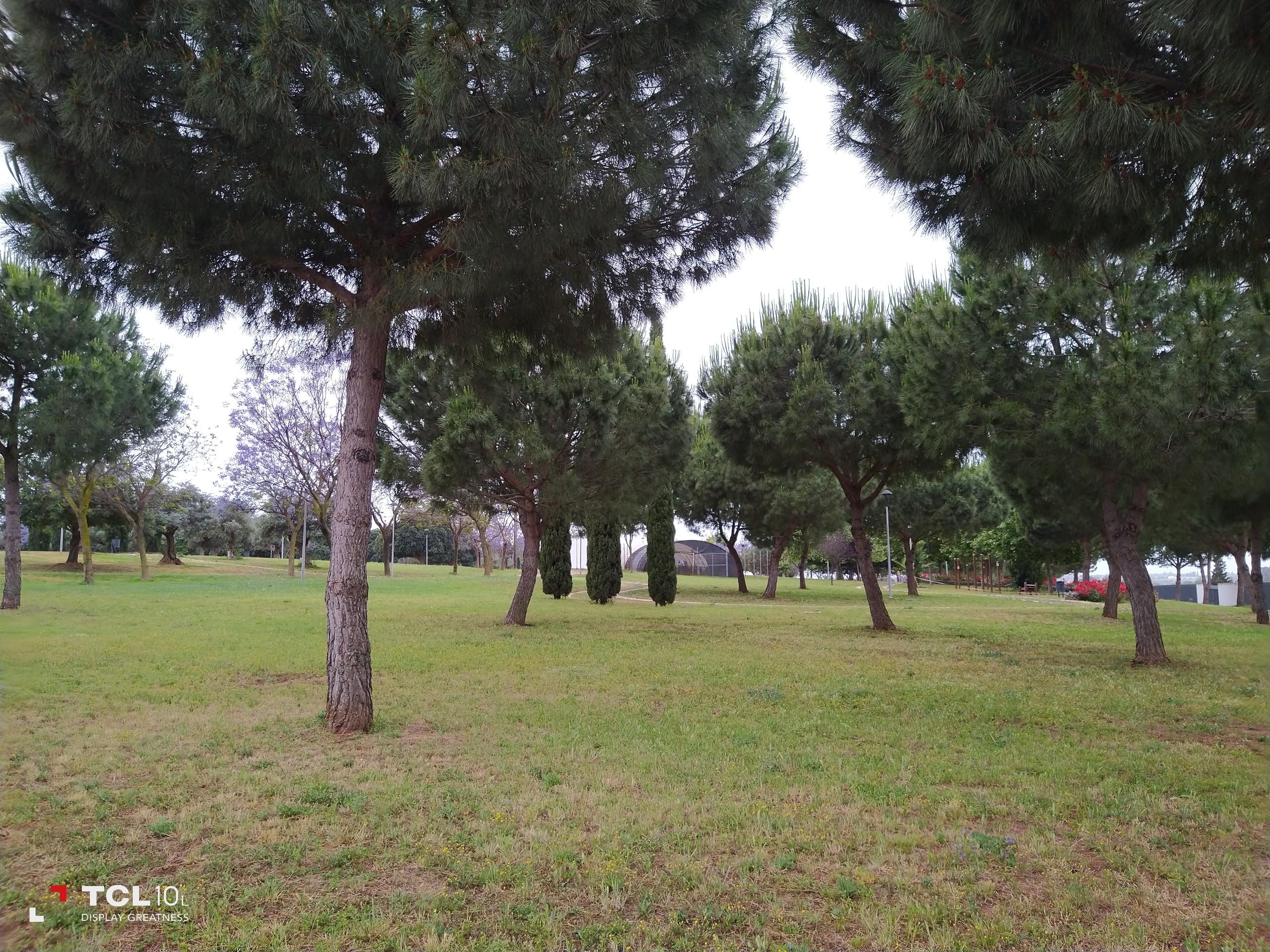 Foto de Más fotografías con el TCL 10L (6/20)