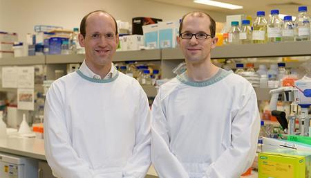 La primera terapia génica que logra revertir la pérdida del memoria de Alzheimer en ratones