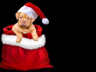 ¿Cómo compramos los regalos de Navidad en 2017?