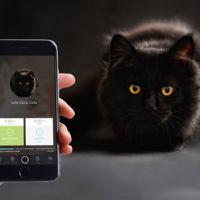 ¿Y si el alimentador inteligente para mascotas falla? Más vale que te pases por casa