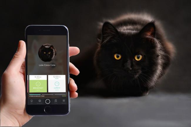 Gato y móvil