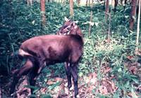 El último mamífero y los secretos de las selvas de Vietnam