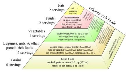 Piramide-vegana-2003