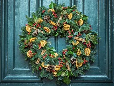 ¿Te animas? 5 especies vegetales para decorar tu casa esta Navidad