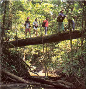 Las selvas de Malaysia