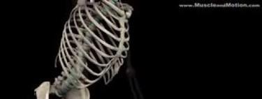 Análisis anatómico de la sentadilla