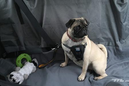 Mascota En El Auto2