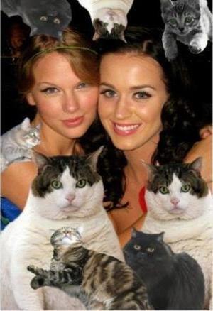 Katy Perry y Russell Brand, van a compartir algo más que una vida en común: un gato