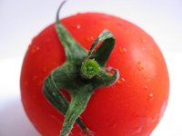 Una píldora de tomate reduce el colesterol