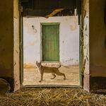 Dos españoles entre los aspirantes a mejor fotógrafo de vida salvaje del año según el Wildlife Photographer of the Year 2021