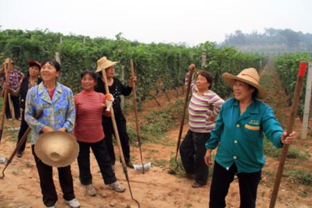 Vino China